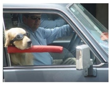Toyota Parts   Car Accessories Your Dog Will Drool Over - Toyota ...