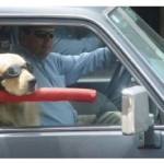 Car Accessories Your Dog Will Drool Over