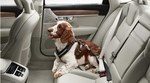 Dog Harness by Volvo